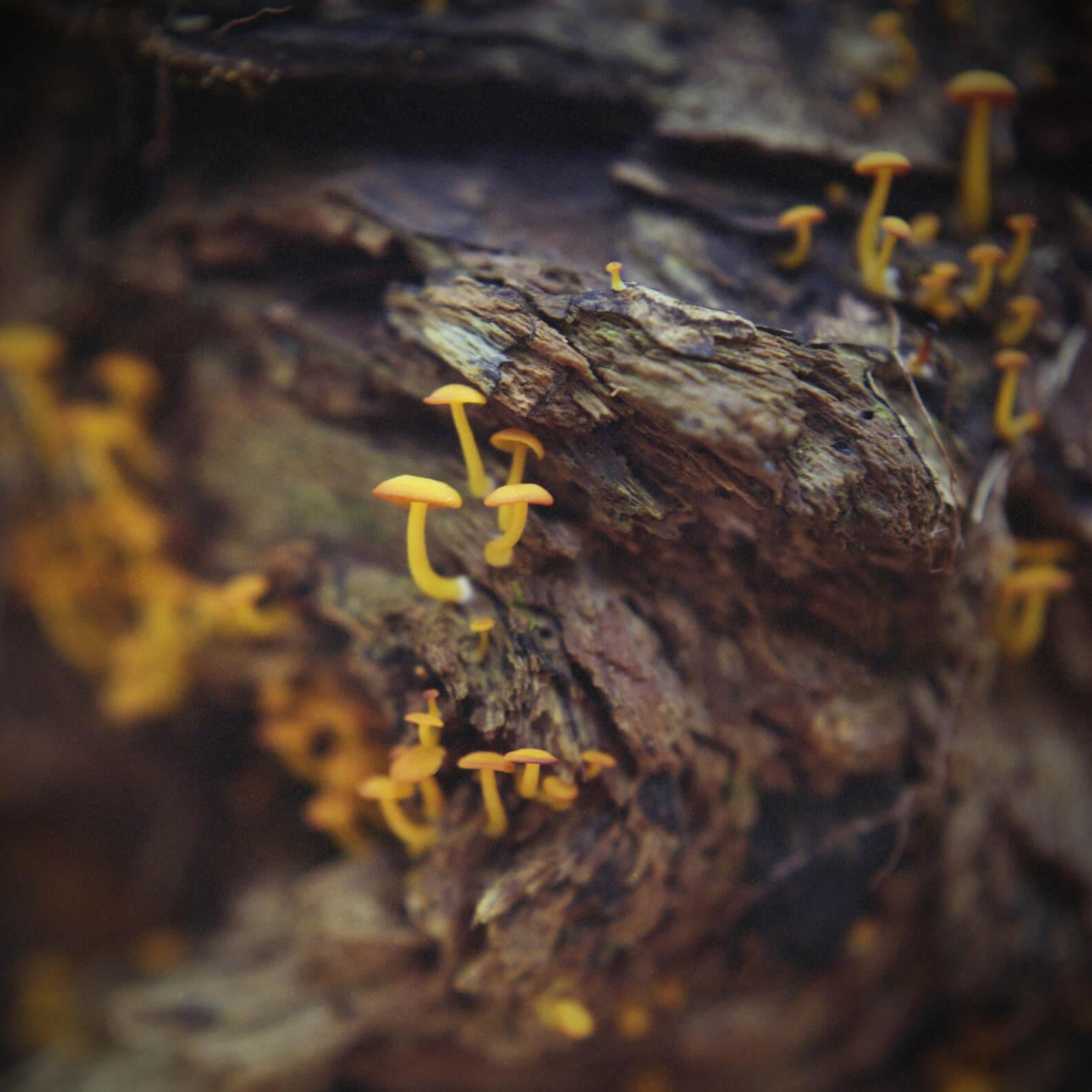 Ieve Holthausen cogumelos 5